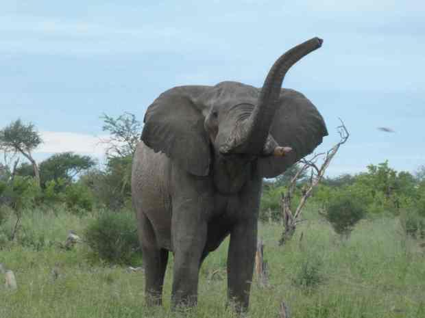 elephant_sands7
